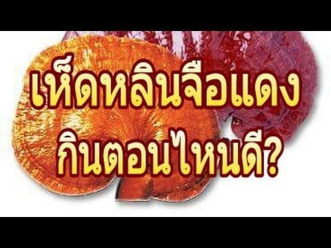 สมุนไพรเห็ดหลินจือแดง กินตอนไหนดี โรคไขมันในเส้นเลือด เบาหวาน ภูมิแพ้ โทร 088 826 4444