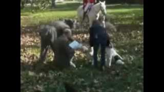 Blessing of the hounds. November 10, 2012, Colonial Fox Hounds Hunt...