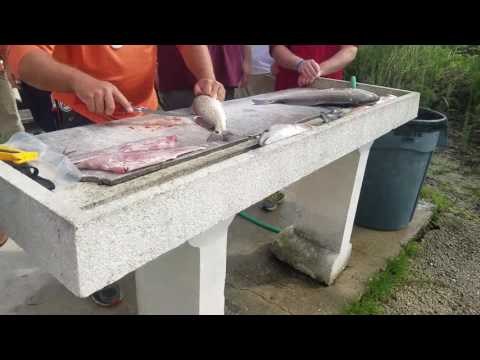 Cleaning Redfish caught in the Atlantic Ocean with Docowen