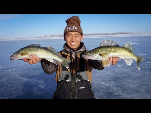 Ice Fishing TINY Sloughs For LIMITS Of Walleyes!