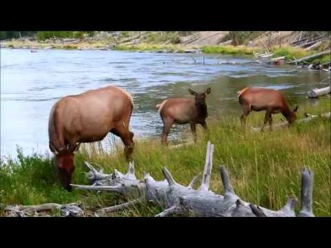 Yellowstone National Park Highlights, Episode 01