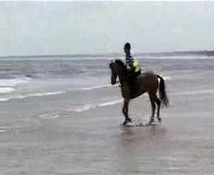 Pony Adventures,Barnaby & Mac Children´s DVD, Seaside Clip