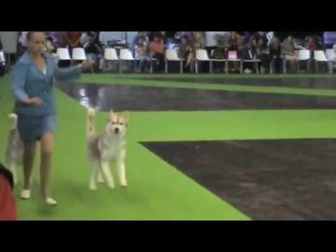 world dog show bad behavior