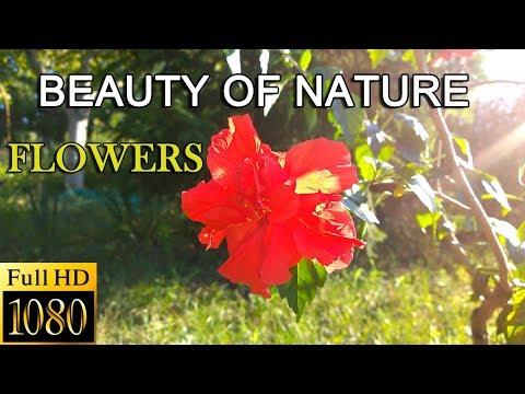 Amazing Nature Scenery - The Beauty of Nature & Beautiful Flowers ・ Full HD 1080p