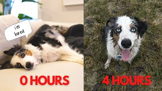 My Dog On 0 hours VS 4 hours Of Exercise
