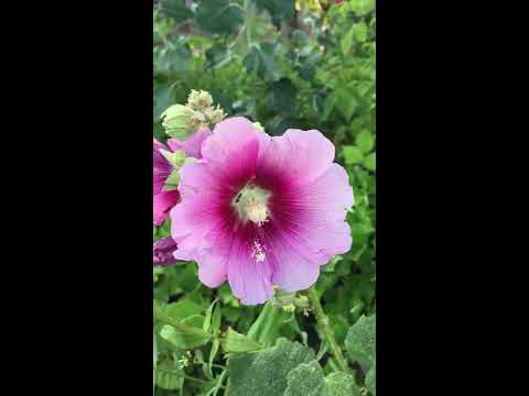 The endless beauty of the flowers  Iphone 6  film  test  by Stan Rams