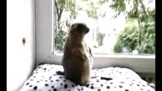 Jozef - The Praire Dog