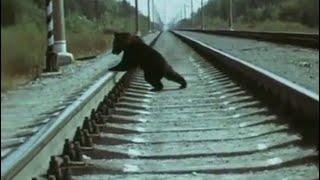 Дрессировщики. 1 фильм. Побег (Киноальманах, 1975-1979) | Золотая коллекция