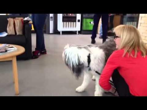 Pet Transport Testimonials   Animal Land Pet Movers