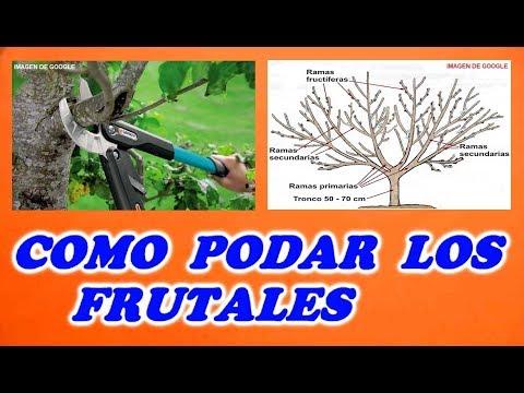 Como podar rboles frutales asurekazani for Cuando se podan los arboles frutales