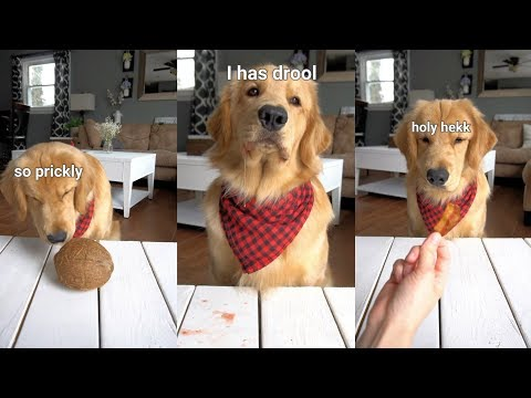 ASMR Dog Reviewing Different Types of Food - Tucker Taste Test #8