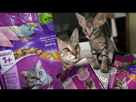 (whiskas)-cat-food-review,-whiskas-dry-cat-food-price-|-best-(cat-food)