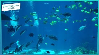 Wrong Set Up & A Heart Problem Killed Scuba Diver | Daily Scuba News (w/Mark)