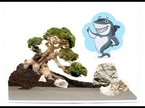 aquascape-for-beginners---bonsai-driftwood-aquarium-tree-layout-tutorial-#2