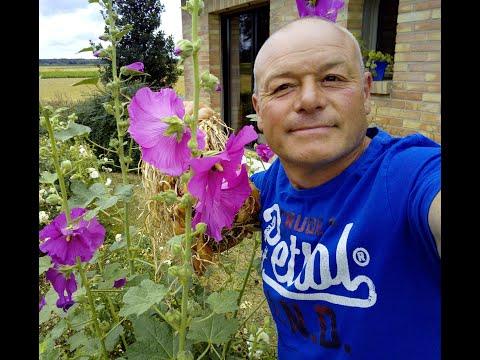 Que faire en avril au jardin desherber vos all es au vinaigre youtube - Que faire au jardin en avril ...