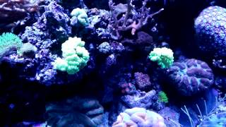 120 Gallon Mixed Marine Coral Reef Aquarium Fish Tank Saltwater 1/4/14