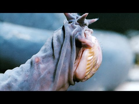 The Hagfish Is the Slimy Sea Creature of Your Nightmares