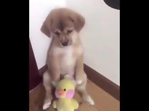 El perro lo regañan y llora