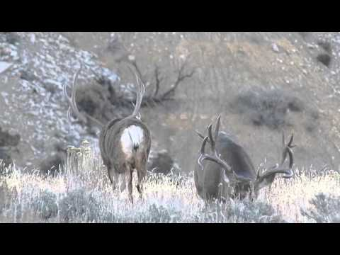 Henry mountains mule deer 2015