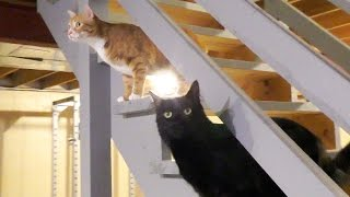 Cats Don't Like Closed Doors!