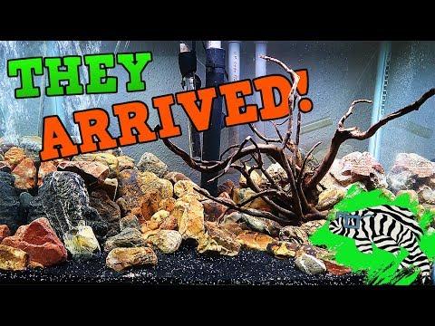 UNBOXING NEW FISH!! Dwarf Orange Crayfish and Longfin Albino Bristlenose Pleco
