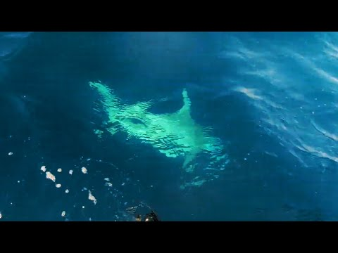 300KG BULL SHARK FISHING ATTACKS
