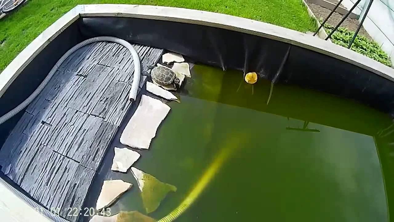 Le bassin de ma tortue youtube - Bassin pour tortue aquatique villeurbanne ...