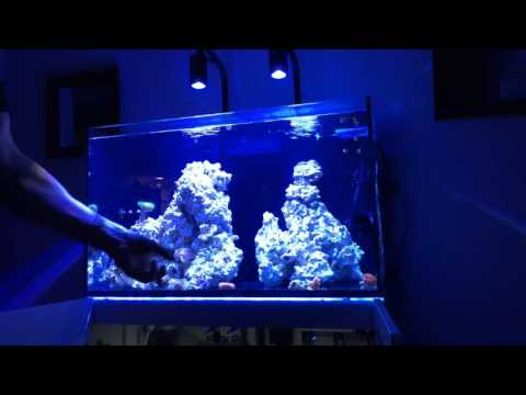 Red Sea Reefer LIVE January 6 2017 Live Stream (Previously Recorded)