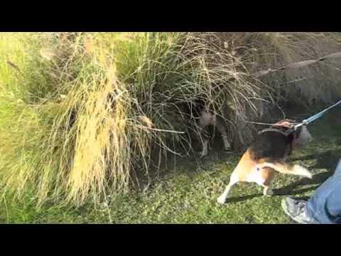 2011-01-04 Palm Springs Hunting