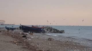 Рыбаки и чайки. Посмотрите что делает собака с богатым уловом! 5 декабря 2018