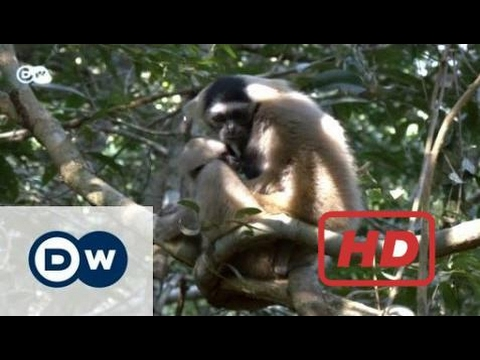 Popular Videos - Smuggling & Documentary Movies hd : Ruthless wildlife smuggling | Global Ideas