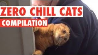 FUNNY ANIMALS FAILS VIDEOS  TRY NOT TO LAUGH FUNNY,   720P HD [ Best video of 2021]