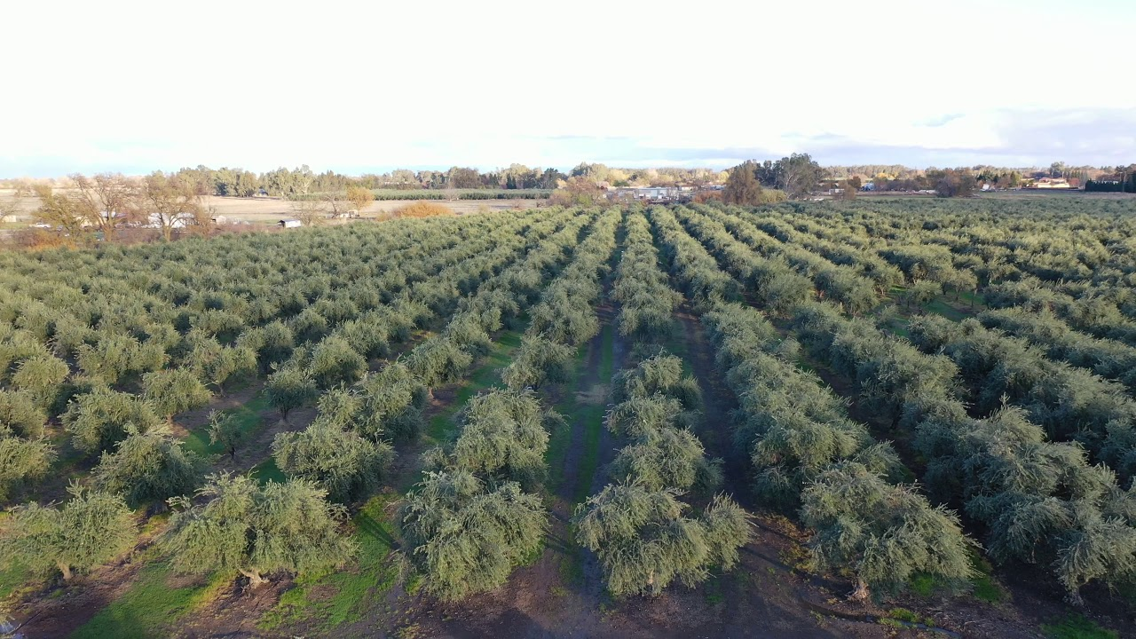 22 5 Acre Olive Orchard For Sale At 0 County Road E Orland Ca 430 000 00