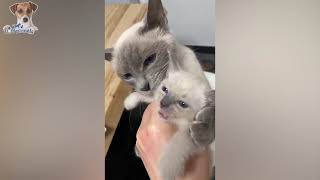 Having a 'Ruff' Day? Watch This Video, Problem Solved 🥰 Funny - Hilarious Dog & Cat Videos