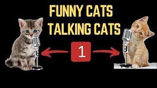 Talking Funny Cats -  Cat Funny Videos 1