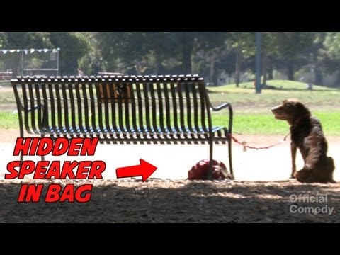 TALKING DOG PRANK - Positively Pranked