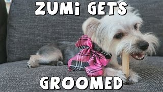 Spend the day with DCTC's Amy Jo while Zumi gets groomed!