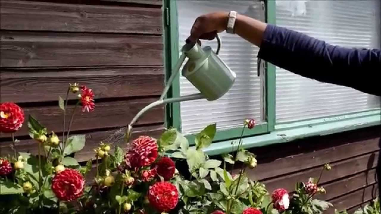 Haws 1 Litre Indoor Watering Can   Brilliant Gardening Gifts