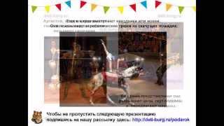 Детям о цирке - детская презентация