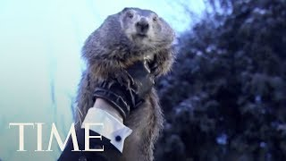 Groundhog Day 2018: Punxsutawney Phil Predicts Winter Is Sticking Around   TIME