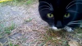 трофейная охота кошки в летний отпуск или отдых летом на даче у моря. охоту снимает камера Lenovo