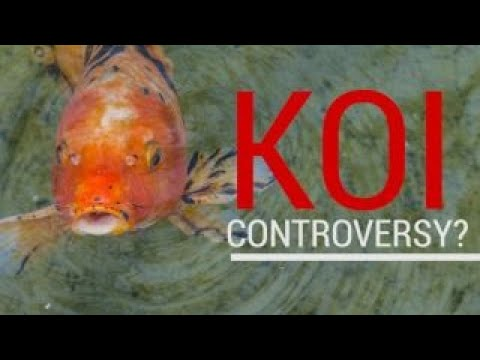 What Trump koi fish controversy? Watch what really happened