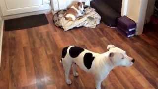 GUARANTEED TO MAKE YOUR DOG HOWL AND BARK