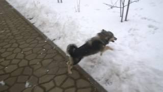 Как правильно выгуливать собак (часть 1)