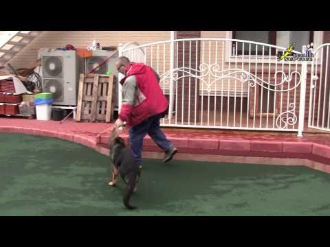 Вопрос: Как отучить собаку от того, чтобы прыгал на вошедшего в дом человека?