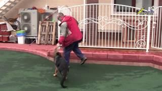 видео Как отучить собаку кусаться. Что делать если собака кусается.