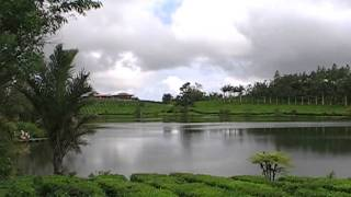 Mauritius.Bois Cheri tea factory and shop