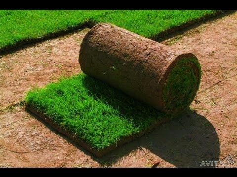 Рулонный газон - это от Компании ПалиСАДник