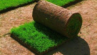 Рулонный газон - это от Компании