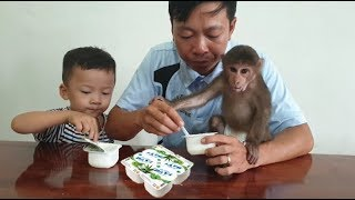 Baby Monkey Eats Yummy Yogurt After Having Lunch - Monkey  Doo